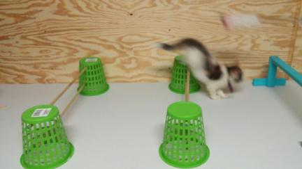 DIY CAT AGILITY MAKE IT YOURSELF Mrs. Dillon 2016-09-09